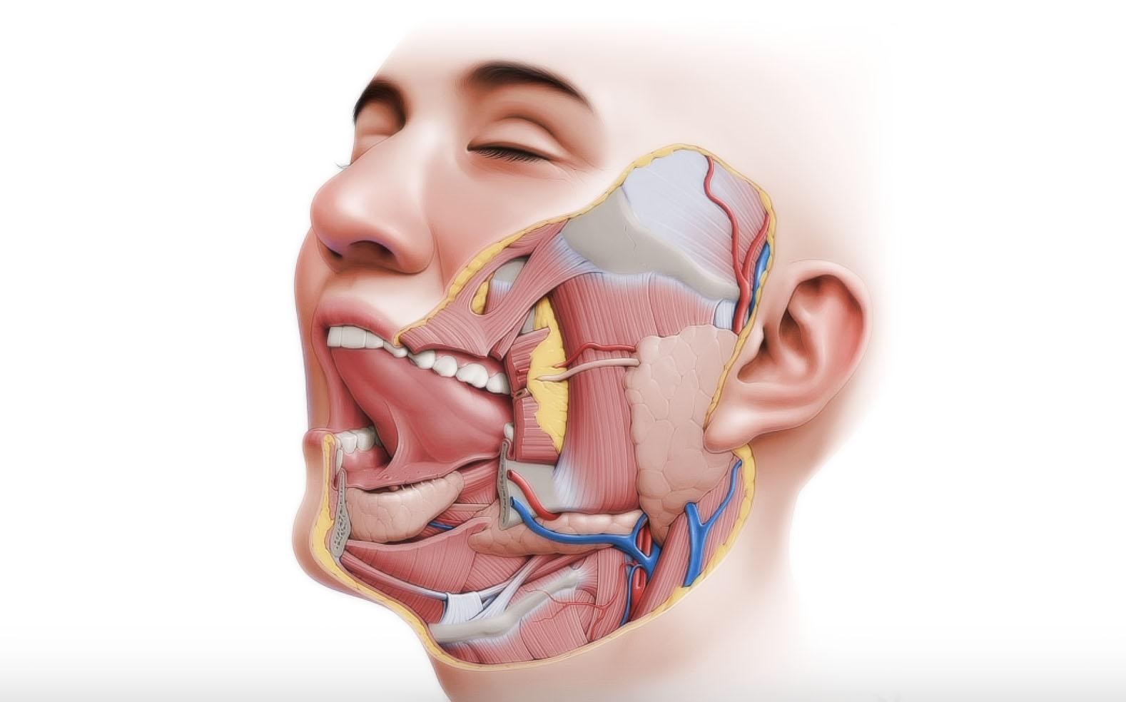 Рак околоушной слюнной железы - симптомы, причины и лечение